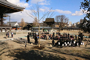 荘川桜植樹式